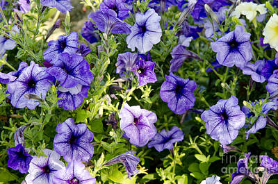Photograph - Happy Flowers by Wilma  Birdwell