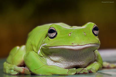 Happy Frog 0003 Original