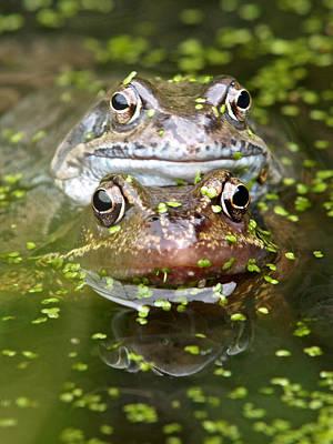 Happy Frogs Art Print