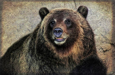 Happy Grizzly Bear Art Print