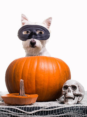 Cute Puppy Photograph - Happy Halloween by Edward Fielding