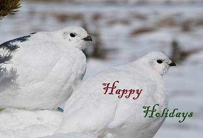 Photograph - Happy Holidays - Winter Ptarmigan by Cascade Colors