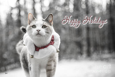 Photograph - Happy Holidays by Alana Ranney