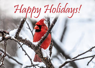 Photograph - Happy Holidays Cardinal 2 by Lara Ellis