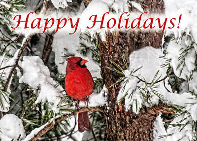 Photograph - Happy Holidays Cardinal  by Lara Ellis