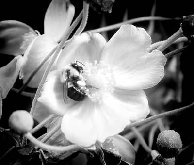 Beauty Mark Photograph - Happy Honeybee by Mark Andrew Thomas