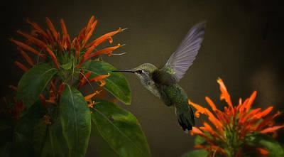 Photograph - Happy Little Hummingbird  by Saija  Lehtonen