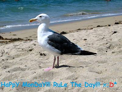Photograph - Happy Monday Seagull by Angela J Wright