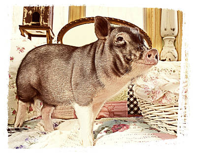 Photograph - Happy Pig by Susan Stone