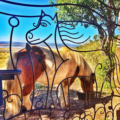 Photograph - Happy Pony Gate by Marti McGinnis