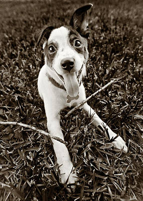 Rat Terrier Photograph - Happy Puppy by Patrick M Lynch