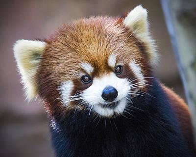 Happy Red Panda Art Print