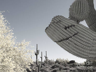 Photograph - Smiling Saguaro by Marianne Jensen