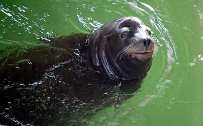Photograph - Happy Seal by AJ  Schibig