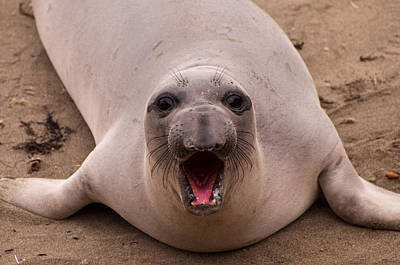 Pets Photograph - Happy Seal by Donna Doherty