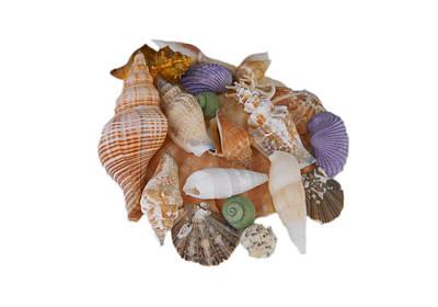 Photograph - Happy Shells by Judy Hall-Folde
