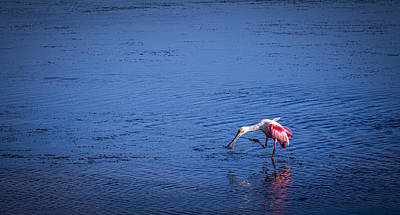 Happy Spoonbill Art Print