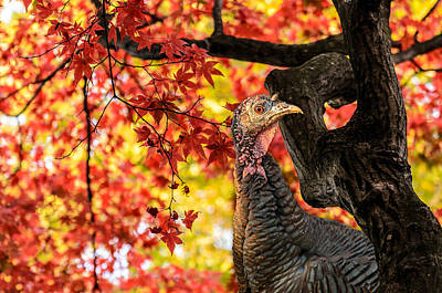 Photograph - Happy Thanksgiving From Wild Turkey by Ludmila Nayvelt