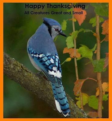 Bluejay Digital Art - Happy Thanksgiving To All by Diane V Bouse