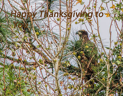 Photograph - Happy Thanksgiving To You by Dorothy Cunningham