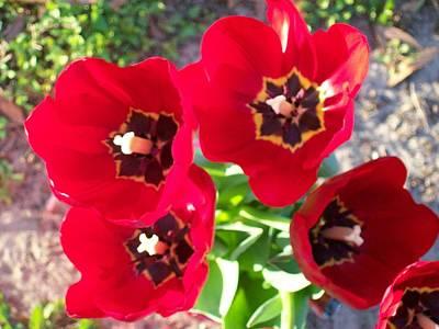 Happy Tulips Art Print by Belinda Lee