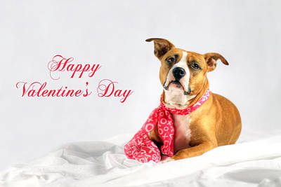Pitbull Photograph - Fifty Shades Of Pink - Happy Valentine's Day by Shelley Neff
