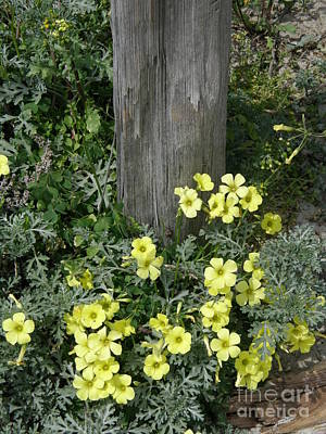 Photograph - Happy Yellow Flowers by Bev Conover