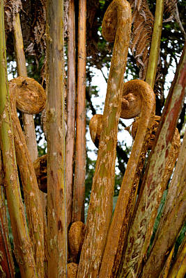 Photograph - Hapu'u Fern Fronds by Lehua Pekelo-Stearns