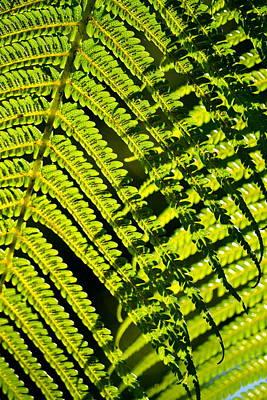 Hapuu Photograph - Hapu'u Silhouette by Lehua Pekelo-Stearns