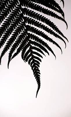 Hapu'u Frond Leaf Silhouette Art Print by Lehua Pekelo-Stearns