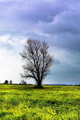 Photograph - Harbinger Of Spring by Edgar Laureano