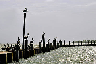 Photograph - Guardians Of The Harbor by Maria Nesbit