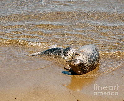 Photograph - Harbor Seal Mother And Pup by Johanne Peale