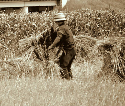 Photograph - Hard At Work - Amish Boy by Linda Rae Cuthbertson