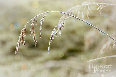 Photograph - Hard Frost by Cheryl Baxter