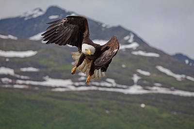 Eagle Photograph - Hard Left Trun by Tim Grams