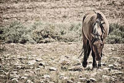 Forelock Photograph - Hard Life For Wild Horses D7925 by Wes and Dotty Weber