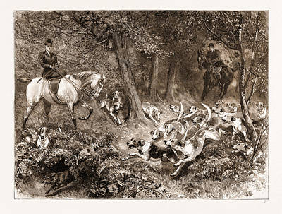 Woodlands Scene Drawing - Hard Pressed A Woodland Scene by Litz Collection