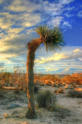 Joshua Tree Photograph - Hard Right       by Ron Clark