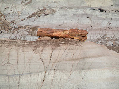 Photograph - Hard Rock Log Petrified National Forest by Becky Erickson