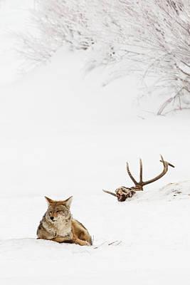 Carcass Photograph - Hard Winter by Sandy Sisti