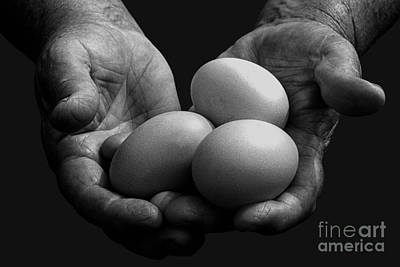 Working Hands Photograph - Hard-working Hands Gathering Eggs by Thomas R Fletcher