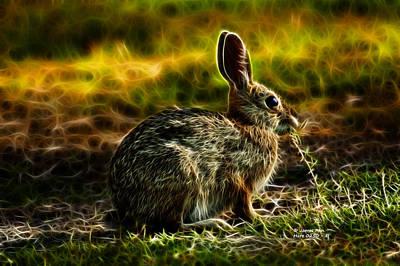 Digital Art - Hare 0250 - F by James Ahn