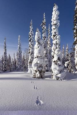 Hare Tracks In Deep Snow Art Print