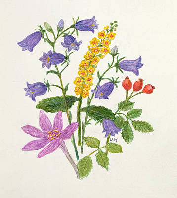 Harebells And Other Wild Flowers  Art Print by Ursula Hodgson