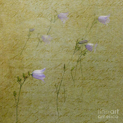 Photograph - Harebells by Liz  Alderdice