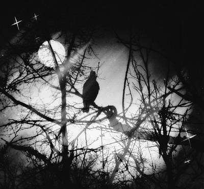 Outside My Window Photograph - Hark The Raven by Sue Rosen