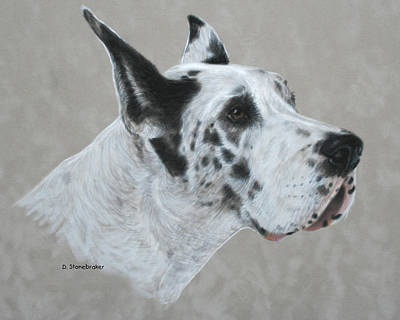 Harlequin Dane Art Print