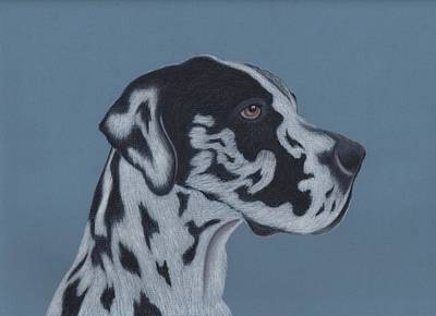 Great Dane Drawing - Harlequin Great Dane by Sesh Artwork