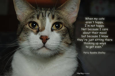 Photograph - Harley When Cats Aren't Happy Shelley by Robyn Stacey